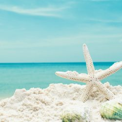 seashells-blue-sea-pliazh-more-sand-pesok-beach-rakushki-sum